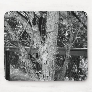 Black and White Tree Nature Photo Mouse Pad