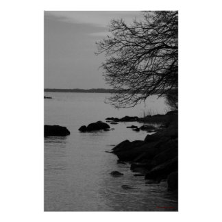 Black and White Tree Over Bay #5845 Poster