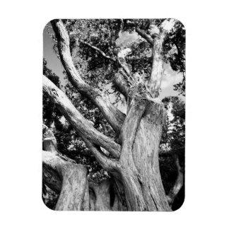 Black and white tree rectangular photo magnet