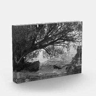 Black and White Tree Silhouette Award