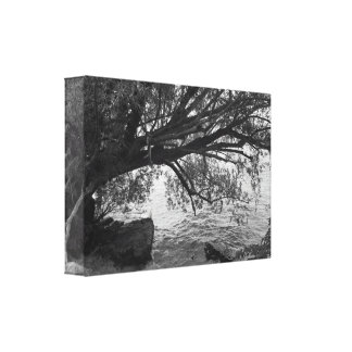 Black and White Tree Silhouette Canvas Print