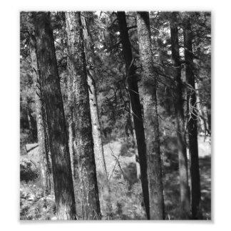 black and white trees all around photo