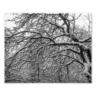 Black and white, trees and snow photo print