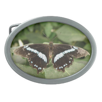 Black and White Tropical Butterfly Belt Buckle