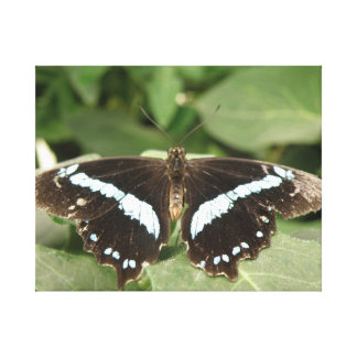 Black and White Tropical Butterfly Canvas Print