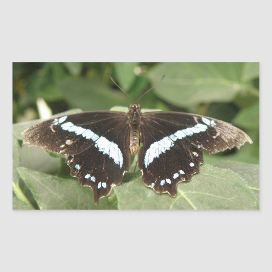 Black and White Tropical Butterfly Stickers