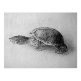 Black and White Turtle Postcard
