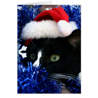 Black and white tuxedo cat christmas hat tinsel greeting cards