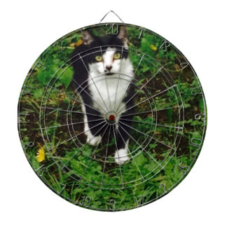 Black and white tuxedo cat in the green grass dartboard with darts