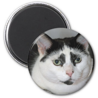 Black and White Tuxedo Cat Magnets