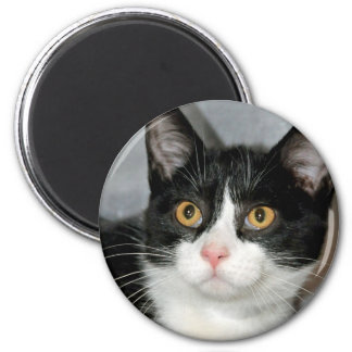 Black and White Tuxedo Cat Magnets