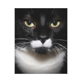 BLACK AND WHITE TUXEDO CAT ON WRAPPED CANVAS