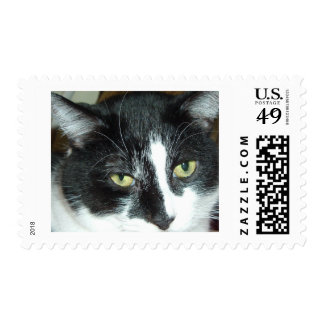Black and White Tuxedo Cat Stamps