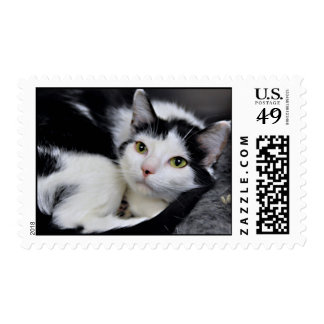 Black and White/Tuxedo Cat Postage Stamps