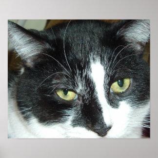 Black and White Tuxedo Cat Poster
