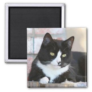 Black and White Tuxedo Kitty Cat Magnet