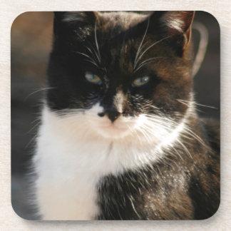 Black and White Tuxedo Kitty Coaster