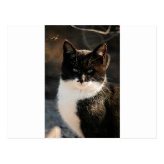 Black and White Tuxedo Kitty Postcard