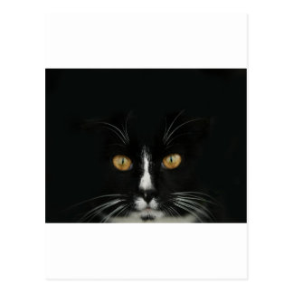 Black and White Tuxedo Kitty With Golden Eyes Postcard