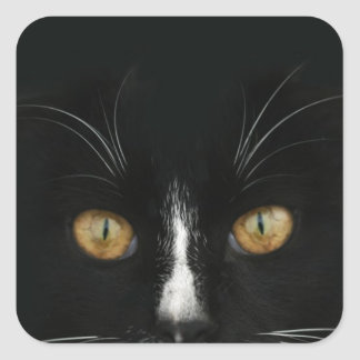 Black and White Tuxedo Kitty With Golden Eyes Square Sticker