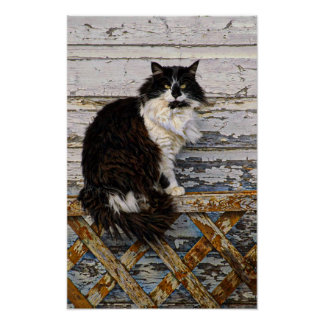 Black and White Tuxedo Tom Cat on Old Fence Poster