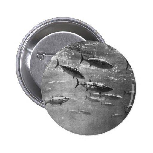 Black and White underwater photograph of Tunas Pins
