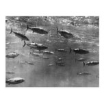 Black and White underwater photograph of Tunas Postcard