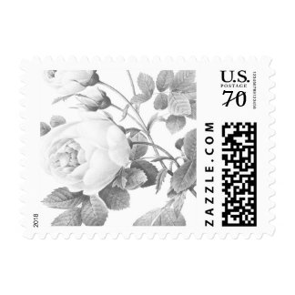 Black and White Vintage Botanical Rose Stamp