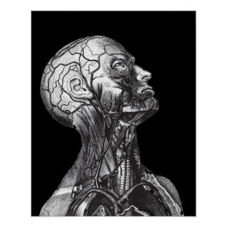 Black And White Vintage Medical Anatomy Head Neck Poster