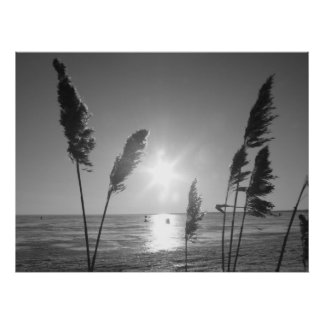 Black and White weeds Print