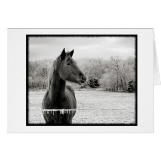 Black and White Winter Horse  Note Card with motiv