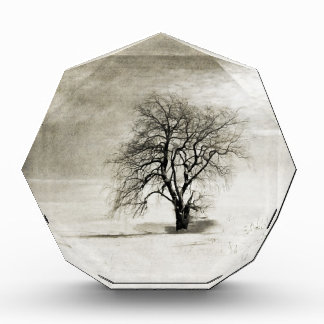 Black and White Winter Tree Acrylic Award