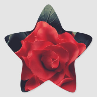 Black and White with Red Rose Star Sticker