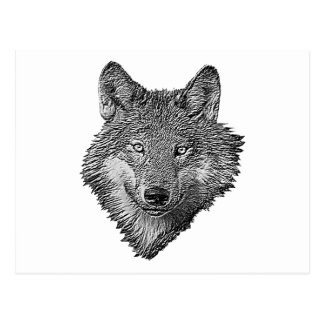 Black and White Wolf Postcard