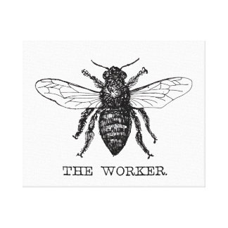 Black and White Worker Bee Vintage Canvas Print