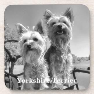 Black and White Yorkshire Terriers Beverage Coaster