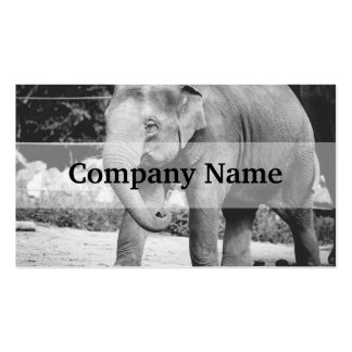 Black and White Young Elepgant Photograph Business Card