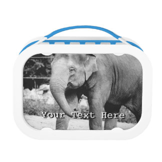 Black and White Young Elepgant Photograph Lunch Box