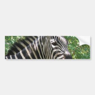 Black and White Zebra Bumper Stickers