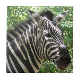 Black and White Zebra  Tile