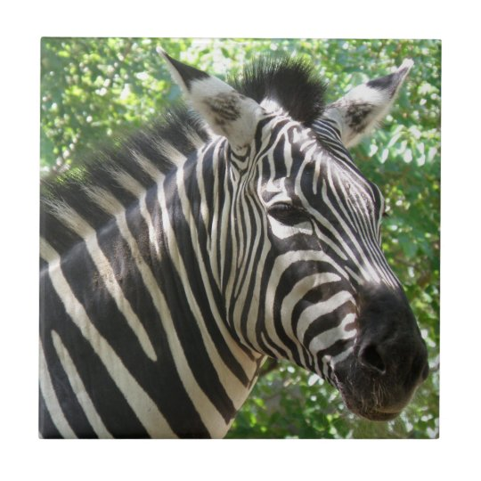 Black and White Zebra  Tile