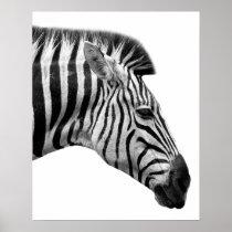 Black and white zebra wild jungle animal photo poster