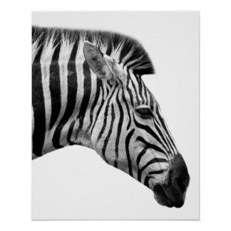 Black and white zebra wild jungle animal photo poster