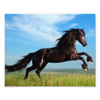 black and wild Stallion Rearing Horse Photo Print
