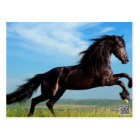 black and wild Stallion Rearing Horse Postcard