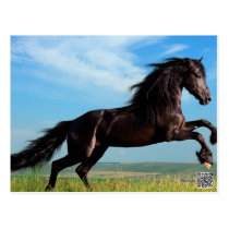 black and wild Stallion Rearing Horse Postcard