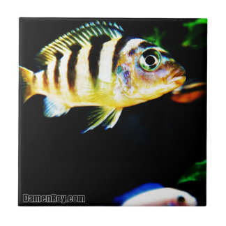 Black and Yellow African Cichlid Fish Ceramic Tile