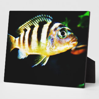 Black and Yellow African Cichlid Fish Plaque