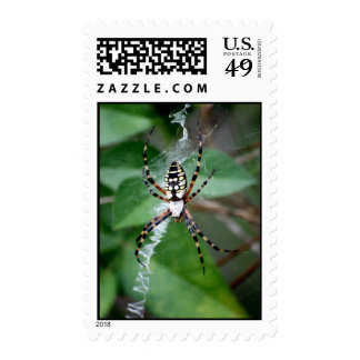 Black-and-Yellow Argiope Postage Stamp