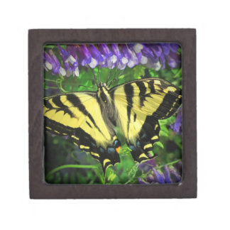 Black and Yellow Butterfly Gift Box